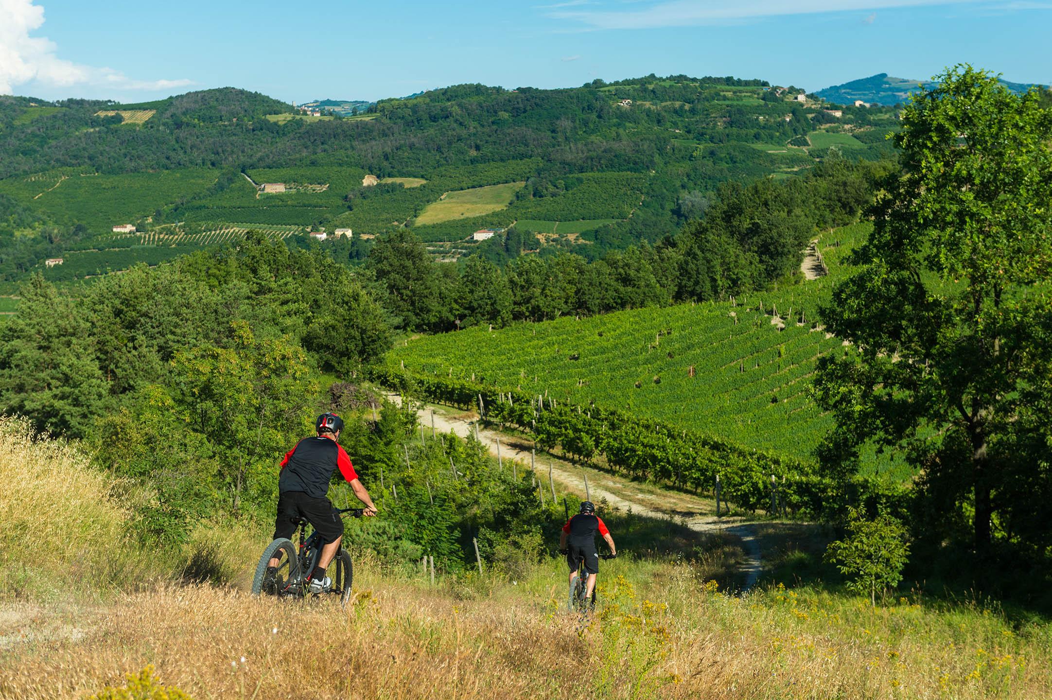Paesaggio delle Langhe, Vigneti, Andare in mountain bike.